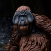 New Dawn of the Planet of the Apes Series 1 Figure Images