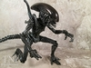 S.H.Monsterarts Alien Warrior Figure Video Review & Images